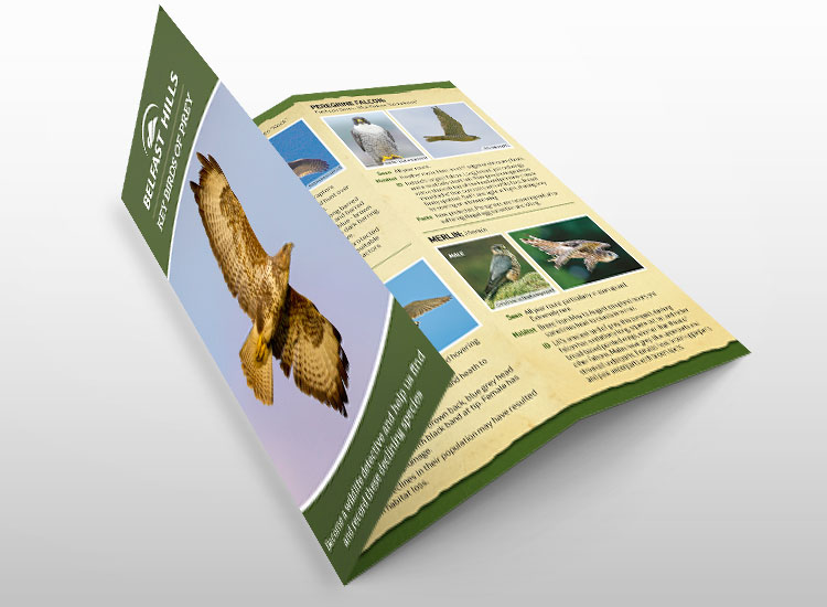 Belfast-Hills-Birds-of-Prey-Leaflet